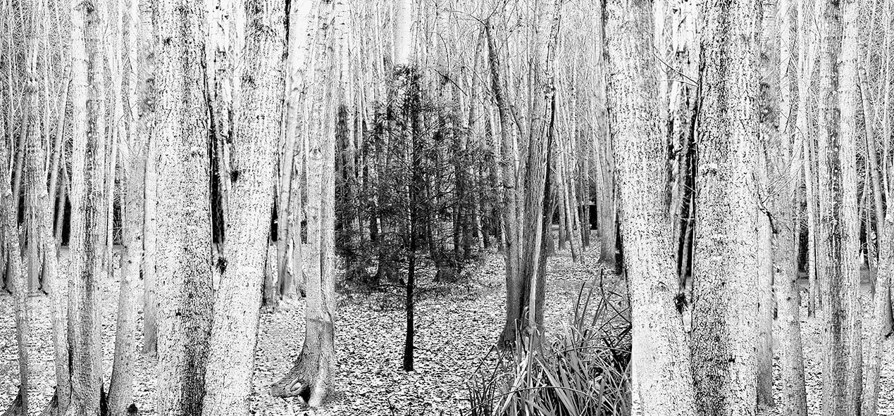 Bosque-blanco
