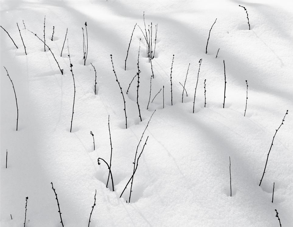 nieves-chico