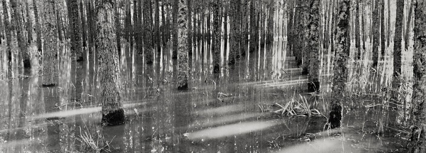 Bosque-en-la-sudestadaWEB