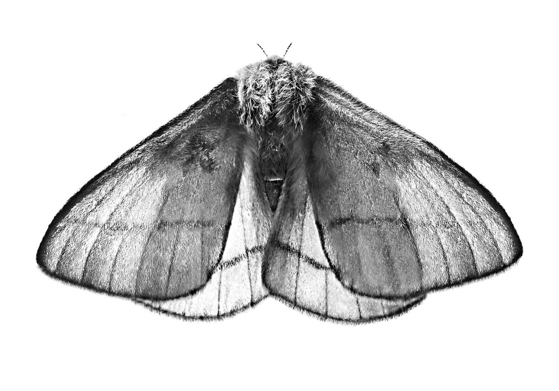 La-polillaWeb