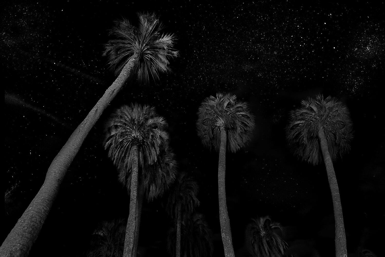 Palmeras-de-nocheWEB